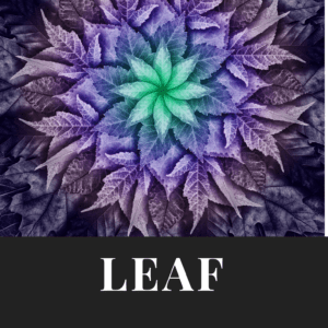 Everything Hoffman Leaf